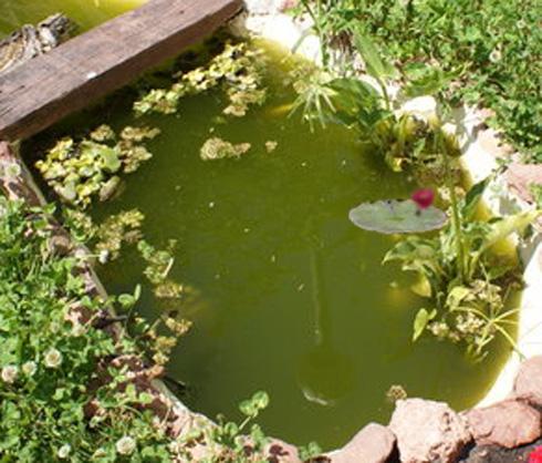 Filtro gravedad estanque hasta litros con l mpara for Estanques para agua precios